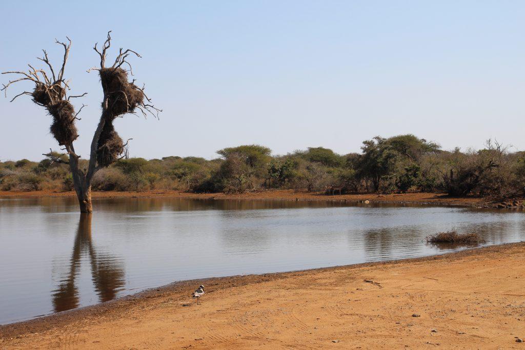 Lake at Kruger National Park