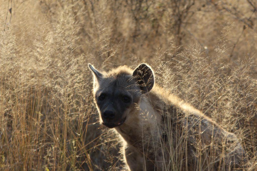 Iena at Kruger National Park